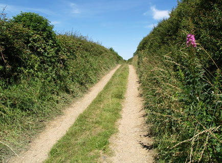 Bempton walking farm track