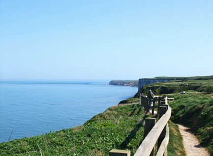 Bempton Cliffs RSPV